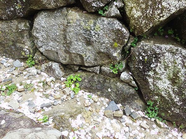 松山城の石