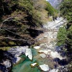 徳島県の祖谷のかずら橋、かずらはコクワのことなんだと(四国の旅16)