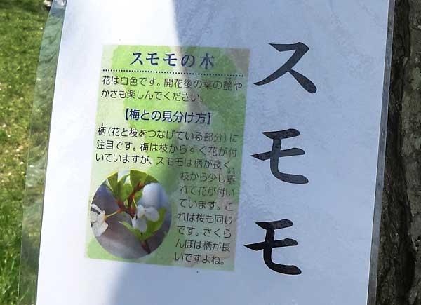 平岡公園 梅林