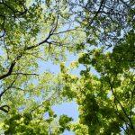 北海道の佐呂間が5月の気温で全国史上最高の39.5度