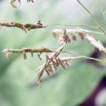 60年に1度の笹の花が咲いたのは不吉の前兆?