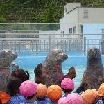 アザラシと大接近!子供とお出かけスポット室蘭水族館