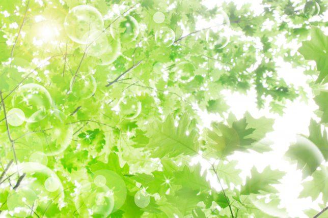テクスチャ緑の葉