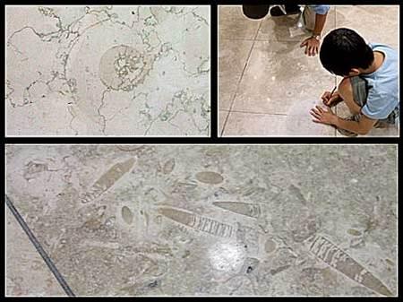 大理石の化石
